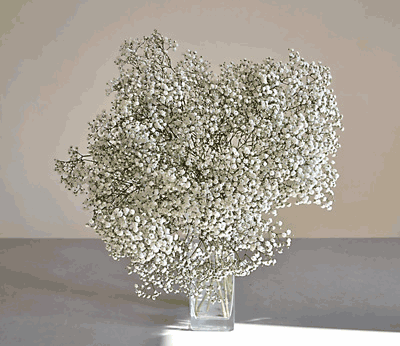 bouquet-gypsophile-barcelone