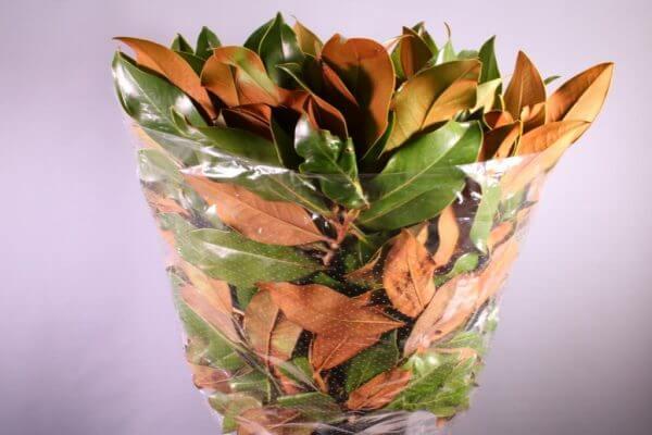 magnolia-flores-barcelona