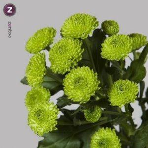 margaritas-verdes-barcelona