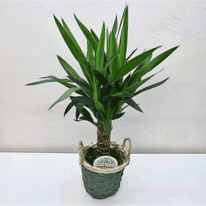 lante-yucca-barcelone