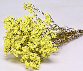 limonium-jaune