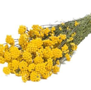 lona-jaune