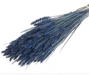 trigo-seco-azul