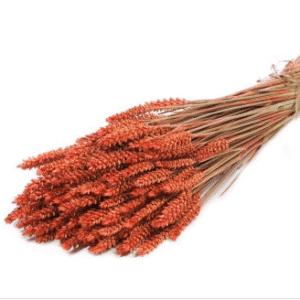 trigo-seco-naranja
