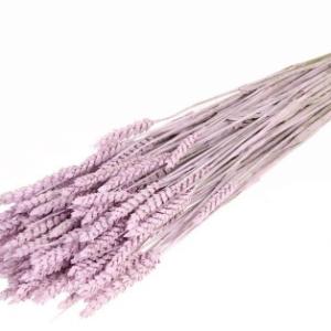 trigo-seco-rosa