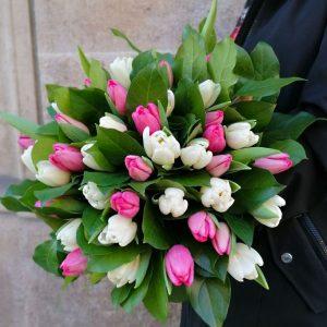 tulipe-rose-blanc