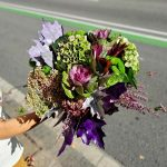 hortensia-fleurs-barcelone